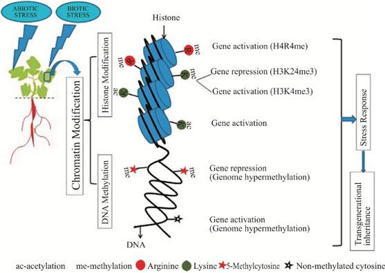Biotic stress