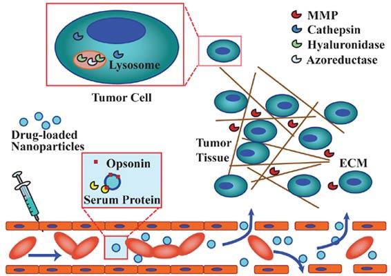 read somatostatin receptors