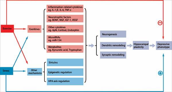 CNS & Neurological Disorders - Drug Targets | Bentham Science