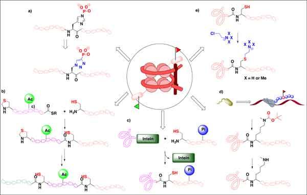 Unnatural Amino Acid Synthesis Unnatural Amino Acid