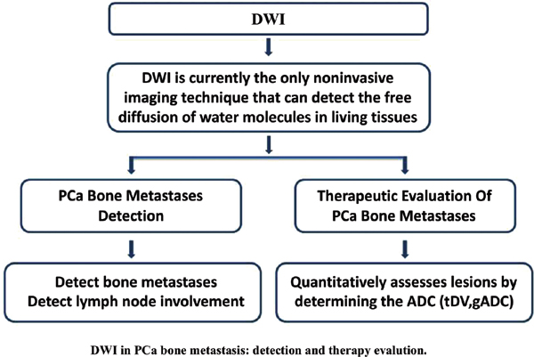 Application of Diffusion Weighted Imaging in Prostate Cancer Bone Metastasis: Detection and Therapy Evaluation