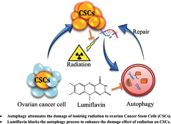 Lumiflavin Enhances the Effects of Ionising Radiation on Ovarian Cancer Stem-Like Cells by Inhibiting Autophagy