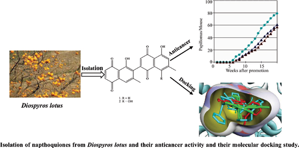 Novel Anticancer Dimeric Naphthoquinones from <i>Diospyros lotus</i> having Anti- Tumor, Anti-Inflammatory and Multidrug Resistance Reversal Potential: <i>In Vitro, In Vivo</i> and <i>In Silico</i> Evidence