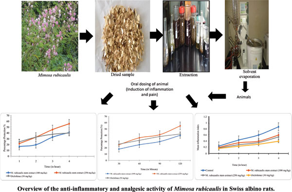 Extraction and Evaluation of Anti-inflammatory and Analgesic Activity of Mimosa rubicaulis in Swiss Albino Rats