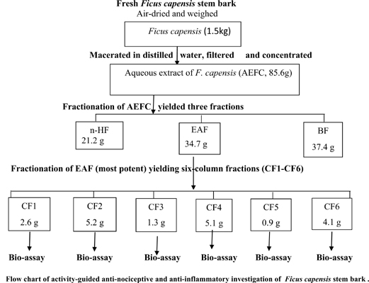 Anti-Nociceptive and Anti-Inflammatory Effects of Stem Bark Extract of <i>Ficus Capensis</i> Thunb (Moraceae) by Bioactivity Fractionation
