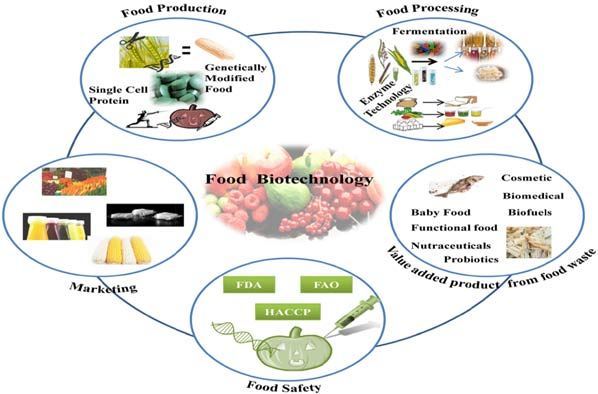 food biotechnology Food biotechnology is the application of modern biotechnological techniques to the manufacture and processing of food, for example through fermentation of food (which is the oldest biotechnological process) and food.