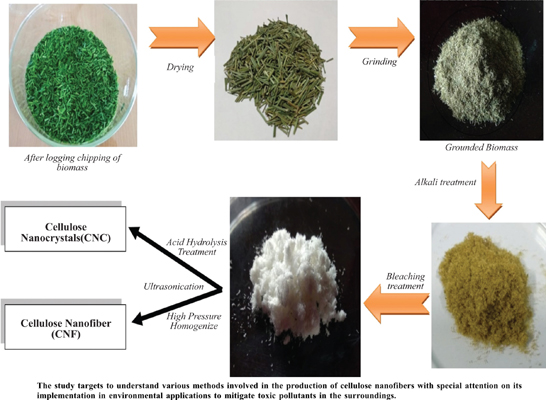 Recovery of Cellulose Nanofiber from Lignocellulosic Biomass: Recent Trends and Applications