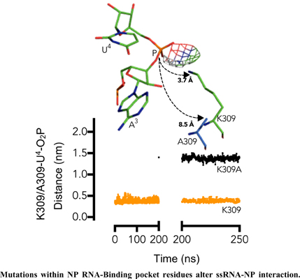 Alteration of ssRNA Torsion and Water Influx into ssRNA Pocket in K309A and S247A Mutations