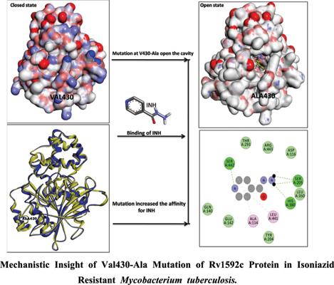 Molecular Dynamics Assisted Mechanistic Insight of Val430-Ala Mutation of Rv1592c Protein in Isoniazid Resistant <i>Mycobacterium Tuberculosis</i>