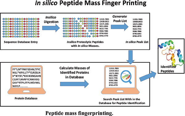 Proteomic Analysis of Medicinal Plant <i>Calotropis Gigantea</i> by <i>In Silico</i> Peptide Mass Fingerprinting