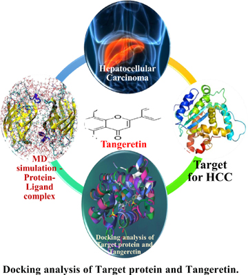 Anti-tumorigenic Efficacy of Tangeretin in Liver Cancer – An In Silico Approach
