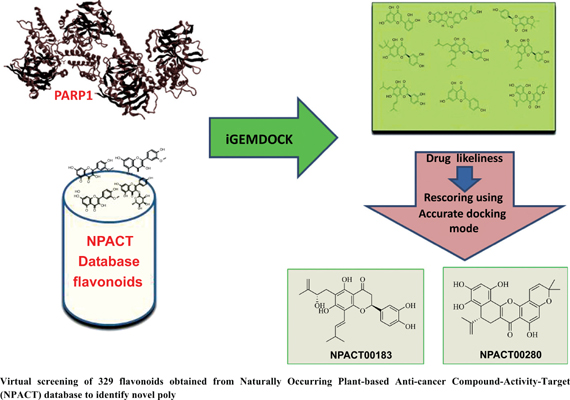 <i>In Silico</i> Discovery of Novel Flavonoids as Poly ADP Ribose Polymerase (PARP) Inhibitors