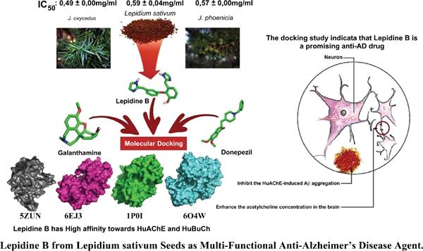 Lepidine B from <i>Lepidium sativum</i> Seeds as Multi-Functional Anti- Alzheimer's Disease Agent: In Vitro and In Silico Studies
