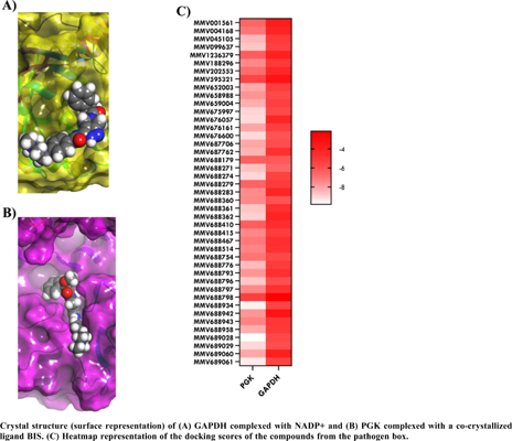 Molecular Docking, QSAR and Microscopic Studies of Anti-trypanosomal Compounds from the Pathogen Box