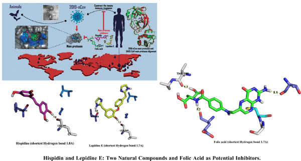 Hispidin and Lepidine E: Two Natural Compounds and Folic Acid as Potential Inhibitors of 2019-novel Coronavirus Main Protease (2019- nCoVM<sup>pro</sup>), Molecular Docking and SAR Study
