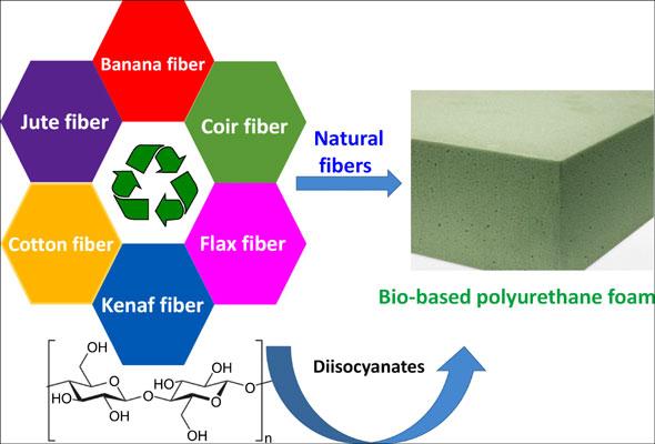 Biobased polyurethane foams