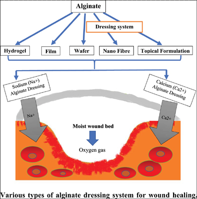 A Comprehensive Review on Alginate as Wound Dressing Biomaterial