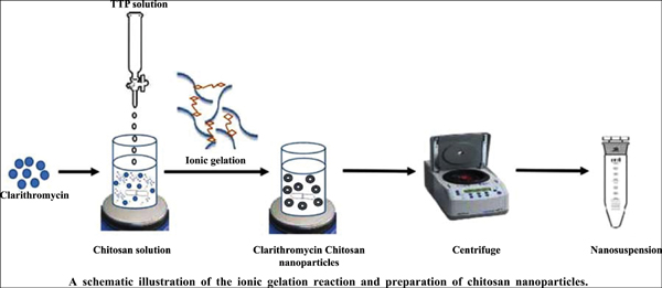 Clarithromycin Loaded Chitosan Nanoparticles: Development and Characterization