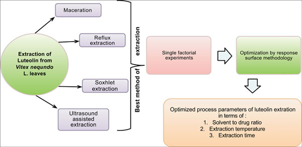 Maximized Extraction Of Flavonoid Luteolin From V Negundo L Leaves Optimization Using Box Behnken Design Bentham Science