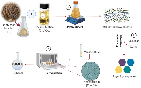 Effect of Choline Acetate on the Yeast Cells During Fermentation: Kinetics Approach