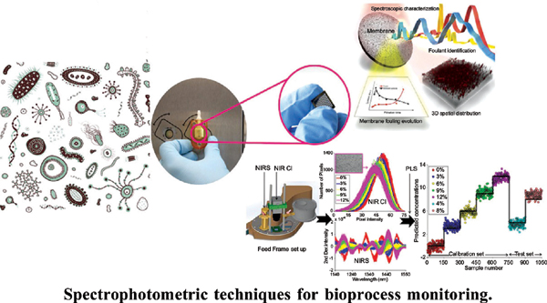 Spectrophotometric Techniques: A Versatile Tool for Bioprocess Monitoring