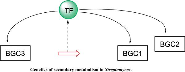 Pleiotropic Regulatory Genes as A Tool for <i>Streptomyces</i> Strains Bioprospecting and Improvement