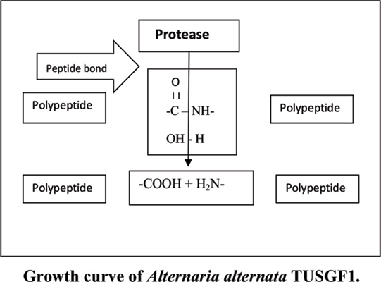 Optimization of Nutritional Parameters by One-Factor-At-A-Time Method for the Biosynthesis of Alkaline Protease from the Isolated Strain <i>Alternaria alternata</i> TUSGF1