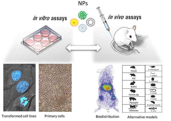 Model Validity in Nanoimmunosafety: Advantages and Disadvantages of In vivo vs In vitro Models, and Human vs Animal Models