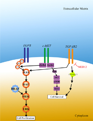 MiRNAs: A New Approach to Predict and Overcome Resistance to Anticancer Drugs