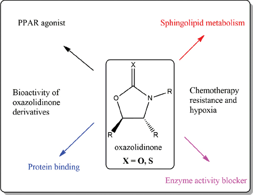 Does the Oxazolidinone Derivatives Constitute a Functional Approach for Cancer Therapy?