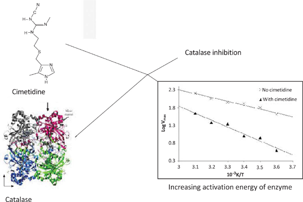 Alteration of Activation Energy of a Reaction in the Catalase of Human Erythrocyte by Cimetidine, an In vitro Thermokinetic Study