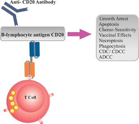Lymphoma And Leukemia Car T Cell Therapy Peer Reviewed