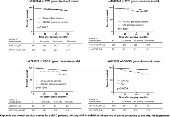 Novel MicroRNA Binding Site SNPs and the Risk of Clear Cell Renal Cell Carcinoma (ccRCC): A Case-Control Study