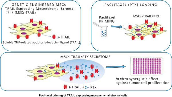 Paclitaxel Priming of TRAIL Expressing Mesenchymal Stromal Cells (MSCs- TRAIL) Increases Antitumor Efficacy of Their Secretome