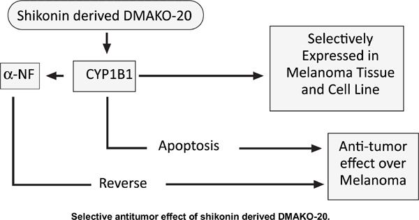 Selective Antitumor Effect of Shikonin Derived DMAKO-20 on Melanoma through CYP1B1