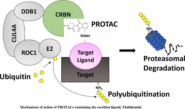 PROTACs: Promising Approaches for Epigenetic Strategies to Overcome Drug Resistance