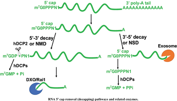 The Role of RNA Modifications and RNA-modifying Proteins in Cancer Therapy and Drug Resistance