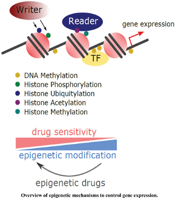 Re-Sensitizing Tumor Cells to Cancer Drugs with Epigenetic Regulators