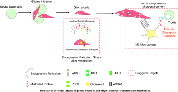 Rediscovering Potential Molecular Targets for Glioma Therapy Through the Analysis of the Cell of Origin, Microenvironment and Metabolism