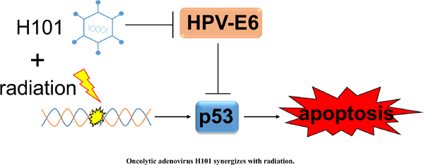 Oncolytic Adenovirus H101 Synergizes with Radiation in Cervical Cancer Cells