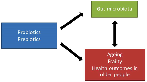 Effects of Probiotics and Prebiotics on Frailty and Ageing: A Narrative Review