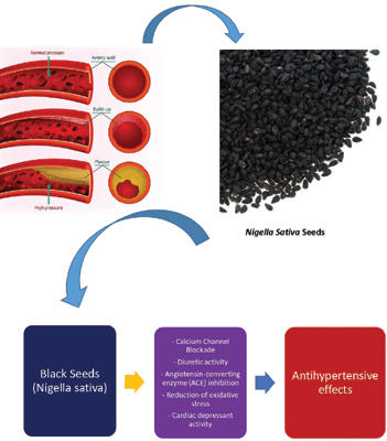 <i>Nigella Sativa</i> (Black Seeds), A Potential Herb for the Pharmacotherapeutic Management of Hypertension - A Review