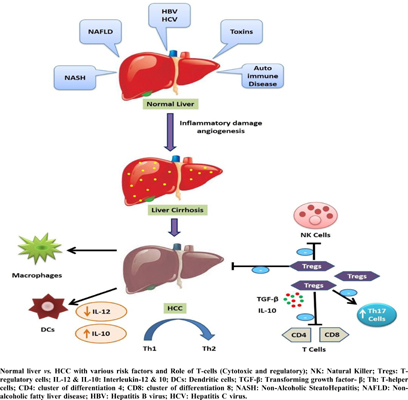 Current and Future Scenario of Immunotherapy for the Treatment of Hepatocellular Carcinoma