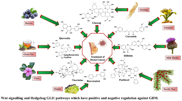 Role of Phytochemicals in the Treatment of Breast Cancer: Natural Swords Battling Cancer Cells