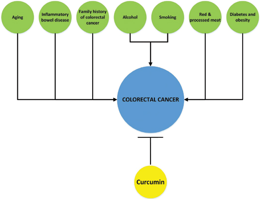 Curcumin A Novel Therapeutic Agent In The Prevention Of Colorectal Cancer Bentham Science