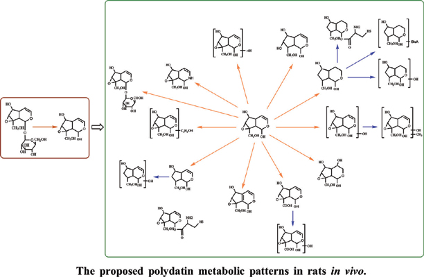 Detection and Identification of Catalpol Metabolites in the Rat Plasma, Urine and Faeces Using Ultra-high Performance Liquid Chromatography-Q Exactive Hybrid Quadrupole-orbitrap High-resolution Accurate Mass Spectrometry