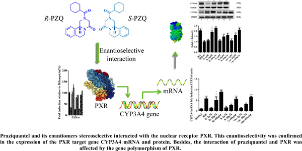 Different Inductive Effects of Praziquantel Racemate and its Enantiomers on the Enzyme CYP3A4 Mediated by Pregnane X Receptor and its Variants