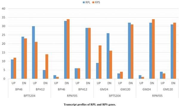 Study on Transcriptional Responses and Identification of Ribosomal Protein Genes for Potential Resistance against Brown Planthopper and Gall Midge Pests in Rice