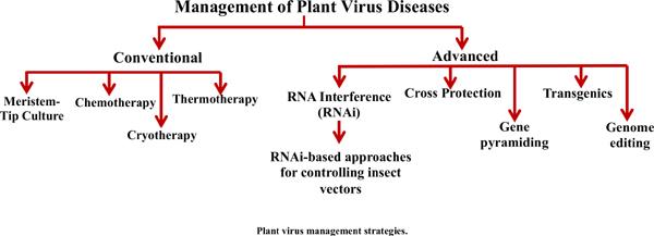 Engineering Resistance Against Viruses in Field Crops Using CRISPRCas9