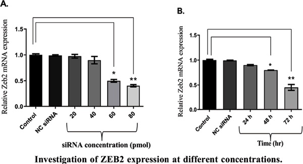 ZEB2 Knock-down Induces Apoptosis in Human Myeloid Leukemia HL-60 Cells